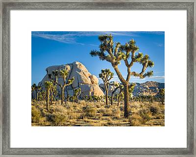 Joshua Tree And Intersection Rock Framed Print