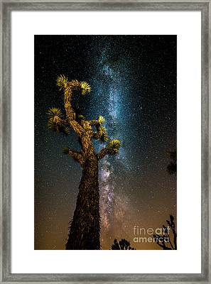 Joshua Tree And Milky Way Framed Print