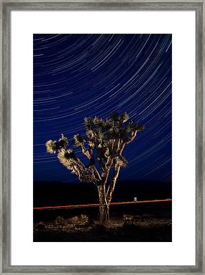 Joshua Tree And Star Trails Framed Print by Steve Gadomski