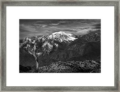 Framed Print featuring the photograph Joshua Tree At Keys View In Black And White by Randall Nyhof