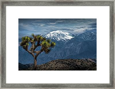 Framed Print featuring the photograph Joshua Tree At Keys View In Joshua Park National Park by Randall Nyhof