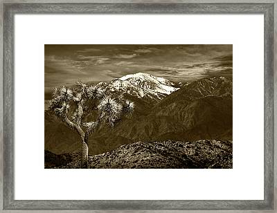 Framed Print featuring the photograph Joshua Tree At Keys View In Sepia Tone by Randall Nyhof