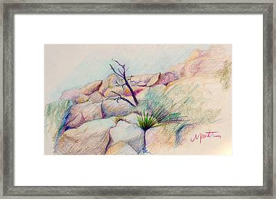 Joshua Tree  Framed Print by Athena  Mantle