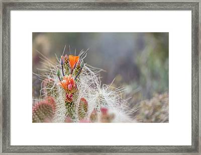 Joshua Tree Cactus And Flower Framed Print by Peter Tellone