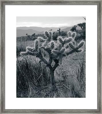 Joshua Tree Cactus Framed Print
