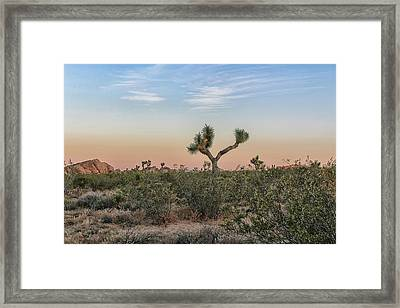 Joshua Tree Evening Framed Print
