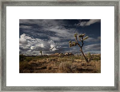 Joshua Tree Fantasy Framed Print