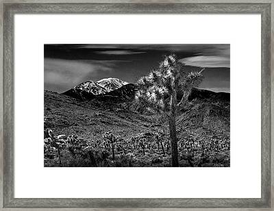 Framed Print featuring the photograph Joshua Tree In Black And White In Joshua Park National Park With The Little San Bernardino Mountains by Randall Nyhof