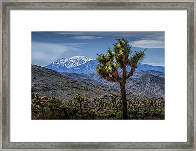 Framed Print featuring the photograph Joshua Tree In Joshua Park National Park With The Little San Bernardino Mountains In The Background by Randall Nyhof