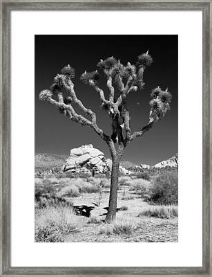 Joshua Tree In Monochrome Framed Print