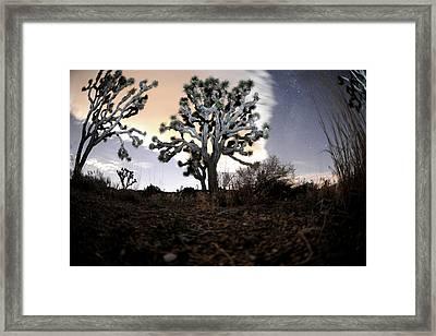 Joshua Tree One Framed Print