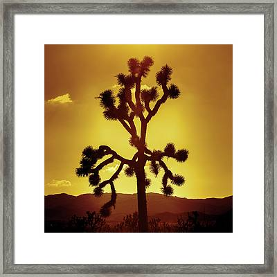 Framed Print featuring the photograph Joshua Tree by Stephen Stookey