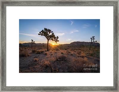 Joshua Tree Sunrise  Framed Print