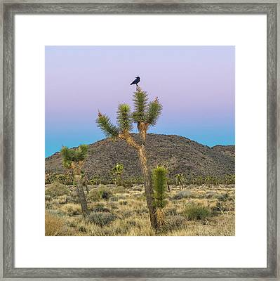 Joshua Tree With Crow Framed Print