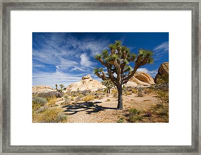 Joshua Tree With Shadow Framed Print by Panoramic Images