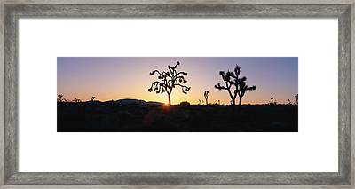 Joshua Trees At Sunset, California Framed Print by Panoramic Images
