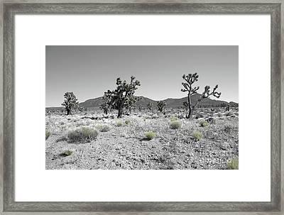 Joshua Trees Framed Print