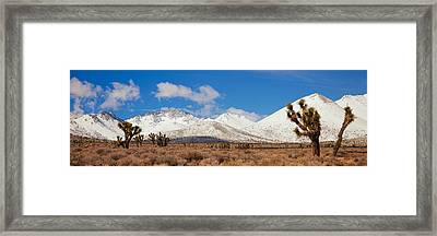 Joshua Trees In The Sierra Nevada Framed Print by Panoramic Images