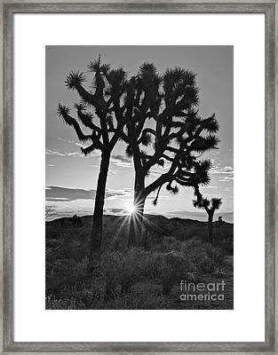 Josua Sun Framed Print by Jamie Pham
