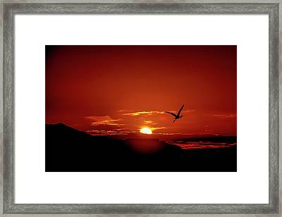 Journey Home Framed Print by Mark Dunton