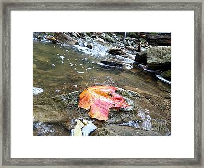 Journey Of A Leaf Framed Print by Scott D Van Osdol