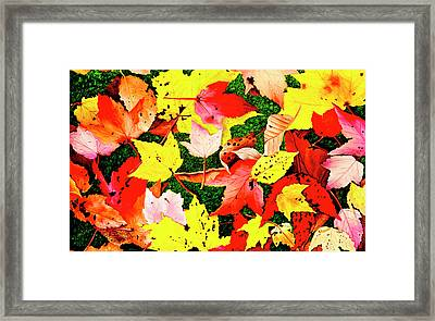 Journeys Into Fall - Prints Of My Original Oil Paintings Framed Print