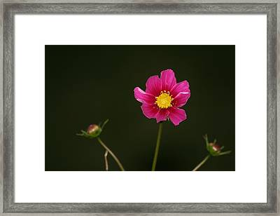 Framed Print featuring the painting Joy by Carrie Maurer