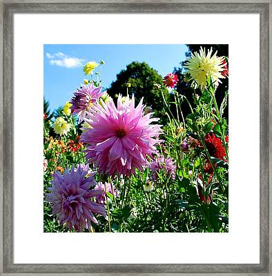 Joy Is In The Air  Framed Print