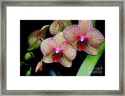 Joy Within Framed Print