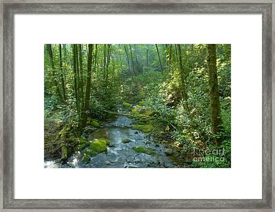 Joyce Kilmer Memorial Forest Framed Print by David Lee Thompson