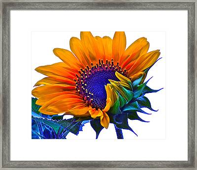 Joyful Framed Print by Gwyn Newcombe