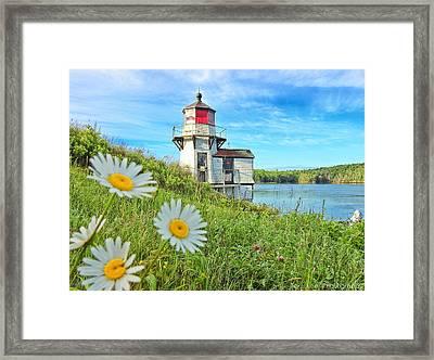 Joyful Light Framed Print