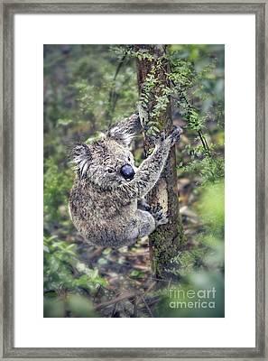 Joyous Hangover Framed Print by Evelina Kremsdorf