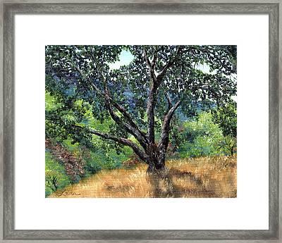 Juan Bautista De Anza Trail Oak Framed Print