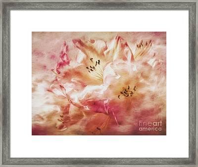 Jubilee Blush Framed Print by Jean OKeeffe Macro Abundance Art
