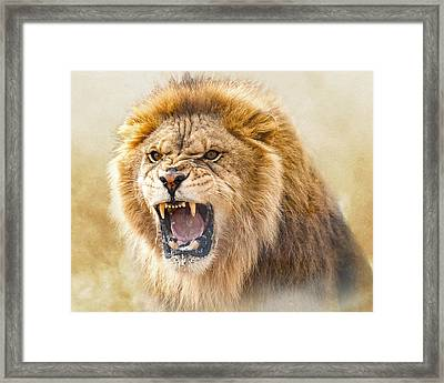 Judah Framed Print by Ron  McGinnis