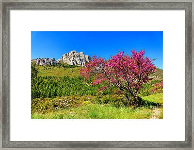 Framed Print featuring the photograph Judas Tree In Sainte Baume by Olivier Le Queinec