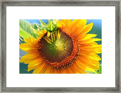 Judy's Dream Framed Print