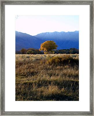 Framed Print featuring the photograph Judy's Tree by Steven Holder
