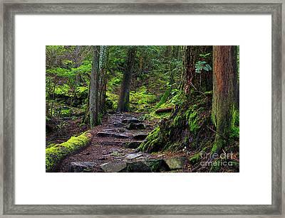 Framed Print featuring the photograph Jug Island Beach Trail by Sharon Talson