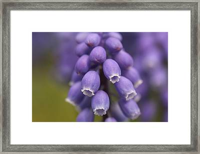 Juggling Act  Framed Print