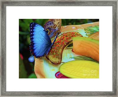 Juicy Fruit Framed Print by Debbi Granruth