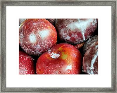 Juicy Plums Framed Print by Janice Drew