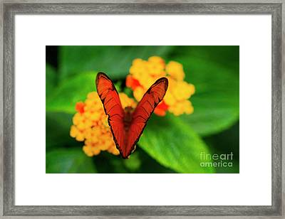 Framed Print featuring the photograph Julia Butterfly, Dryas Iulia by Ralph A Ledergerber-Photography