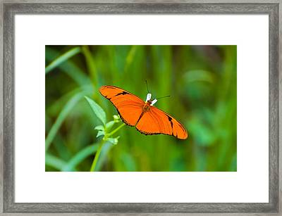 Julia Butterfly Framed Print by Rich Leighton