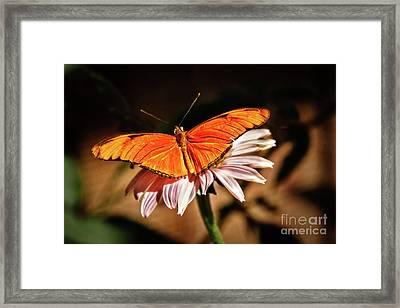 Julia Butterfly Framed Print by Robert Bales
