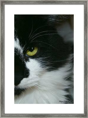 Julies Evil Eye Framed Print by Lynn Andrews