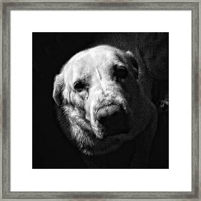 Julio #dog #pet #animal #instadog Framed Print
