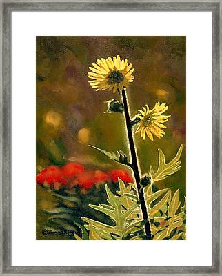 July Afternoon-compass Plant Framed Print by Bruce Morrison