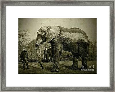 Jumbo The Elepant Circa 1890 Framed Print
